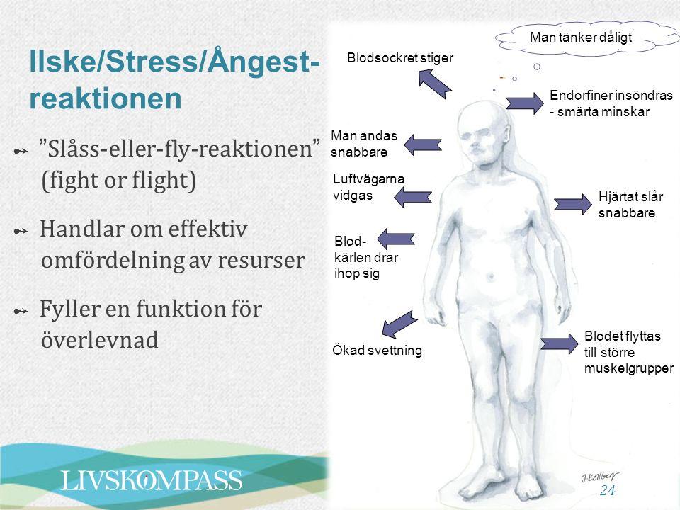 24 Ilske/Stress/Ångest- reaktionen Blodsockret stiger Man tänker dåligt Endorfiner insöndras - smärta minskar Hjärtat slår snabbare Blodet flyttas til