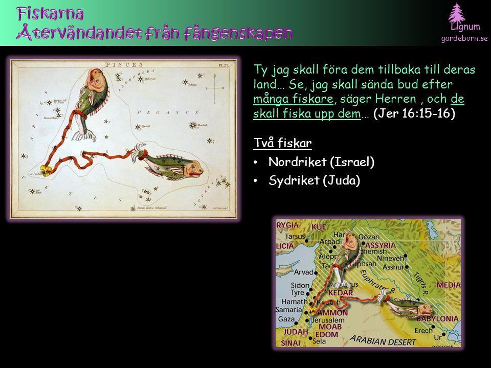 gardeborn.se Ty jag skall föra dem tillbaka till deras land… Se, jag skall sända bud efter många fiskare, säger Herren, och de skall fiska upp dem… (Jer 16:15-16) Två fiskar Nordriket (Israel) Sydriket (Juda)