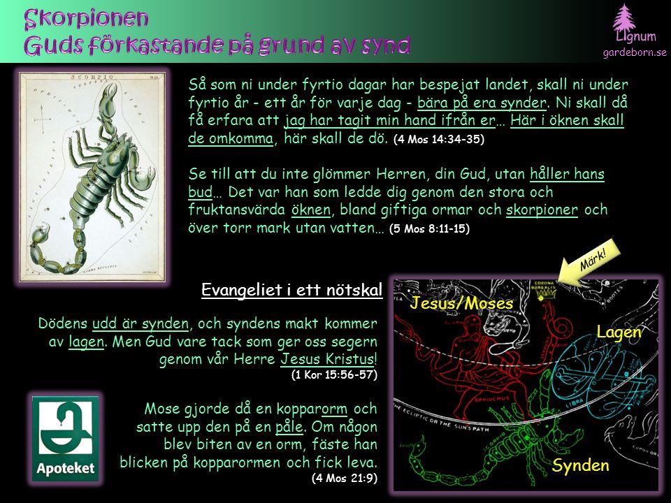 gardeborn.se Se, Lejonet av Juda stam, Davids rotskott, har segrat… (Upp 5:5) Då Jakob välsignar Juda: Ett ungt lejon är Juda… Spiran skall inte vika från Juda, inte härskarstaven från hans fötter… (1 Mos 49:9-10) Väldet över världen tillhör nu vår Herre och hans Smorde, och han ska vara kung i evigheters evighet.