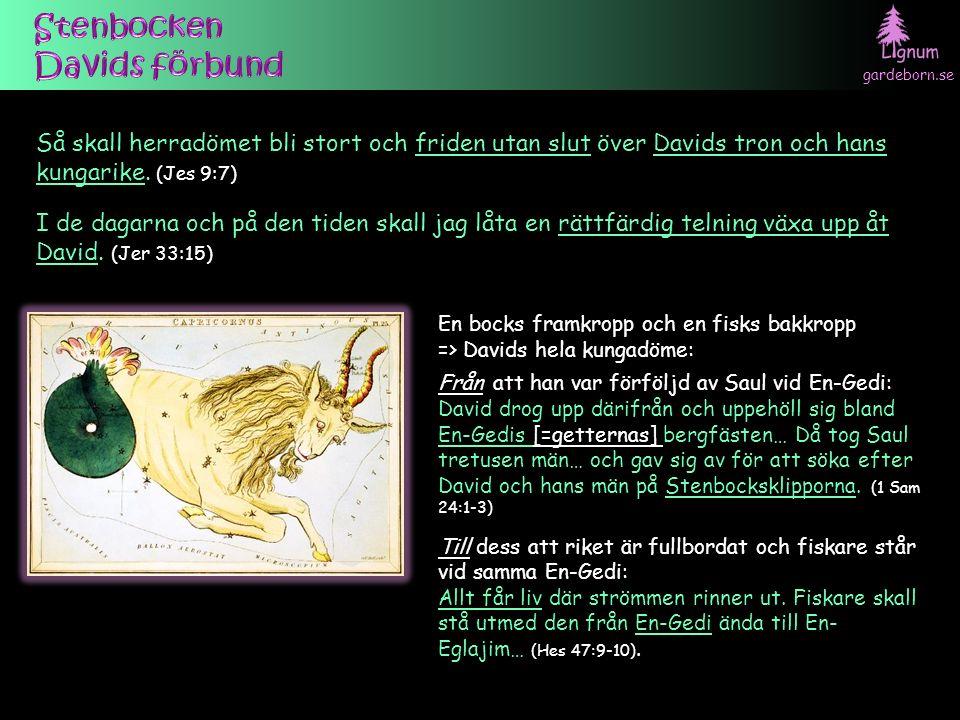 gardeborn.se En bocks framkropp och en fisks bakkropp => Davids hela kungadöme: Från att han var förföljd av Saul vid En-Gedi: David drog upp därifrån och uppehöll sig bland En-Gedis [=getternas] bergfästen… Då tog Saul tretusen män… och gav sig av för att söka efter David och hans män på Stenbocksklipporna.