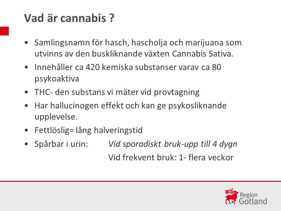 Samlingsnamn för hasch, hascholja och marijuana som utvinns av den buskliknande växten Cannabis Sativa.