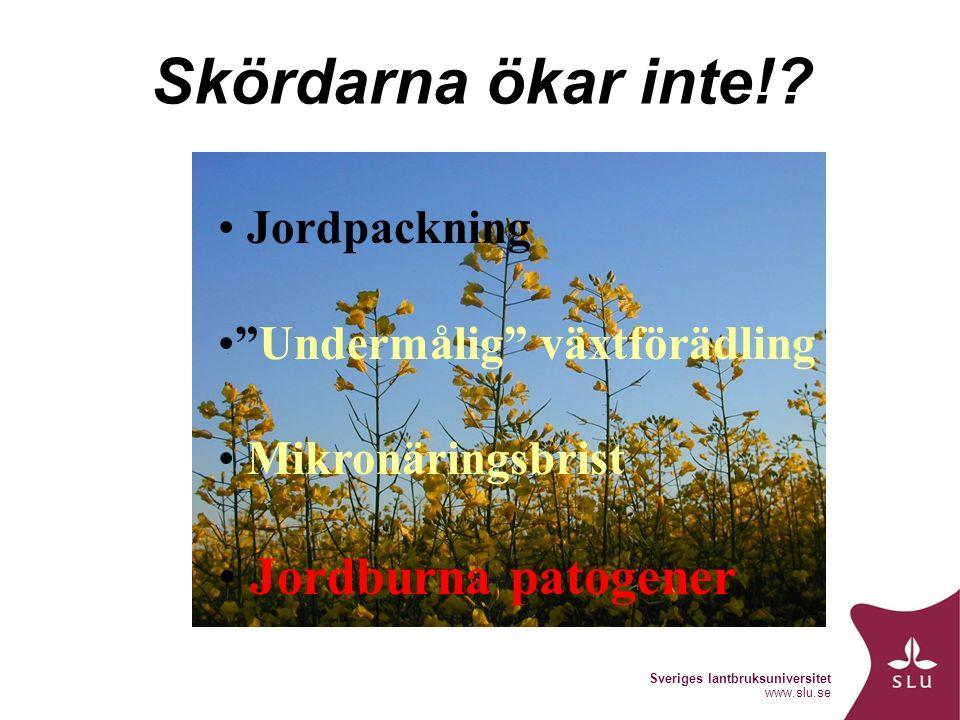 Sveriges lantbruksuniversitet www.slu.se Skördarna ökar inte!.