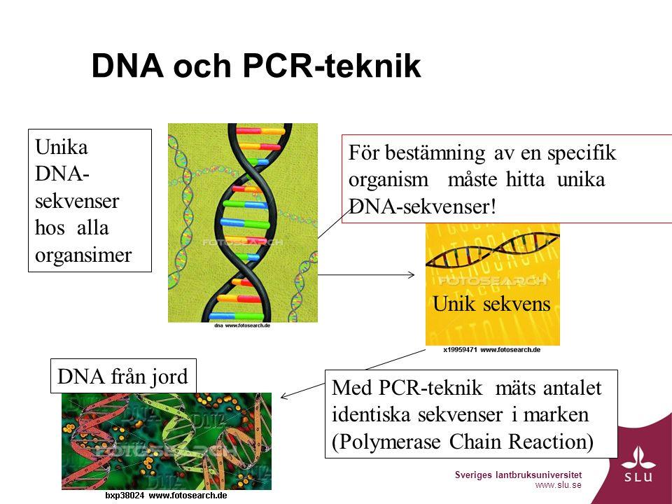 Sveriges lantbruksuniversitet www.slu.se DNA och PCR-teknik Unika DNA- sekvenser hos alla organsimer För bestämning av en specifik organism måste hitta unika DNA-sekvenser.