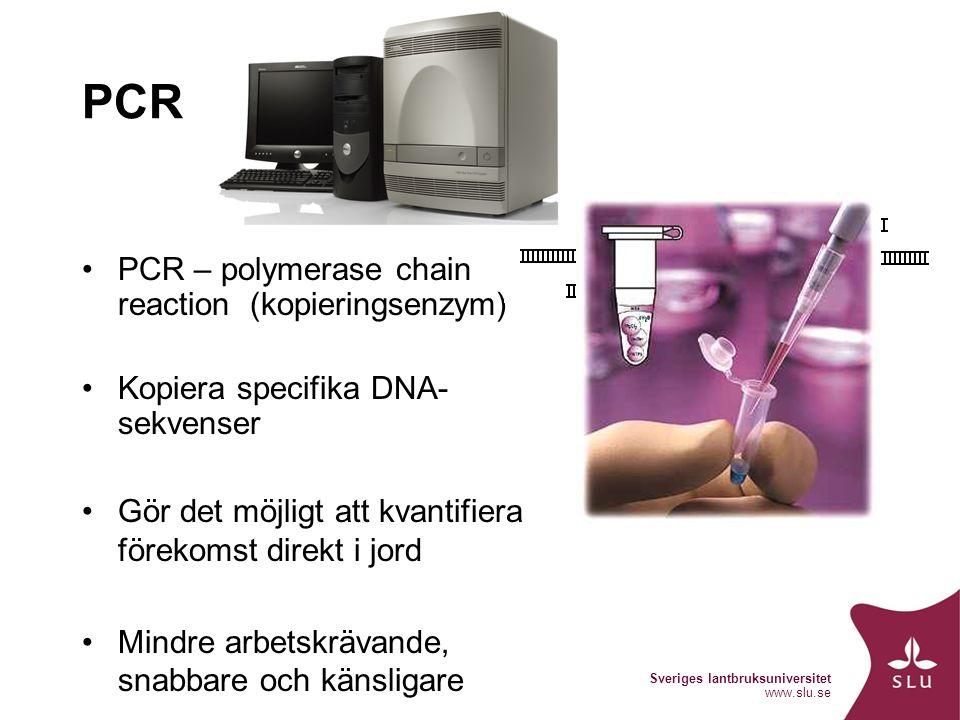 Sveriges lantbruksuniversitet www.slu.se PCR PCR – polymerase chain reaction (kopieringsenzym) Kopiera specifika DNA- sekvenser Gör det möjligt att kvantifiera förekomst direkt i jord Mindre arbetskrävande, snabbare och känsligare