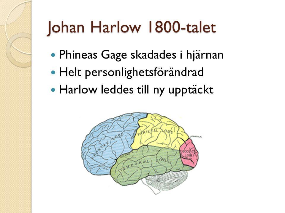 Johan Harlow 1800-talet Phineas Gage skadades i hjärnan Helt personlighetsförändrad Harlow leddes till ny upptäckt