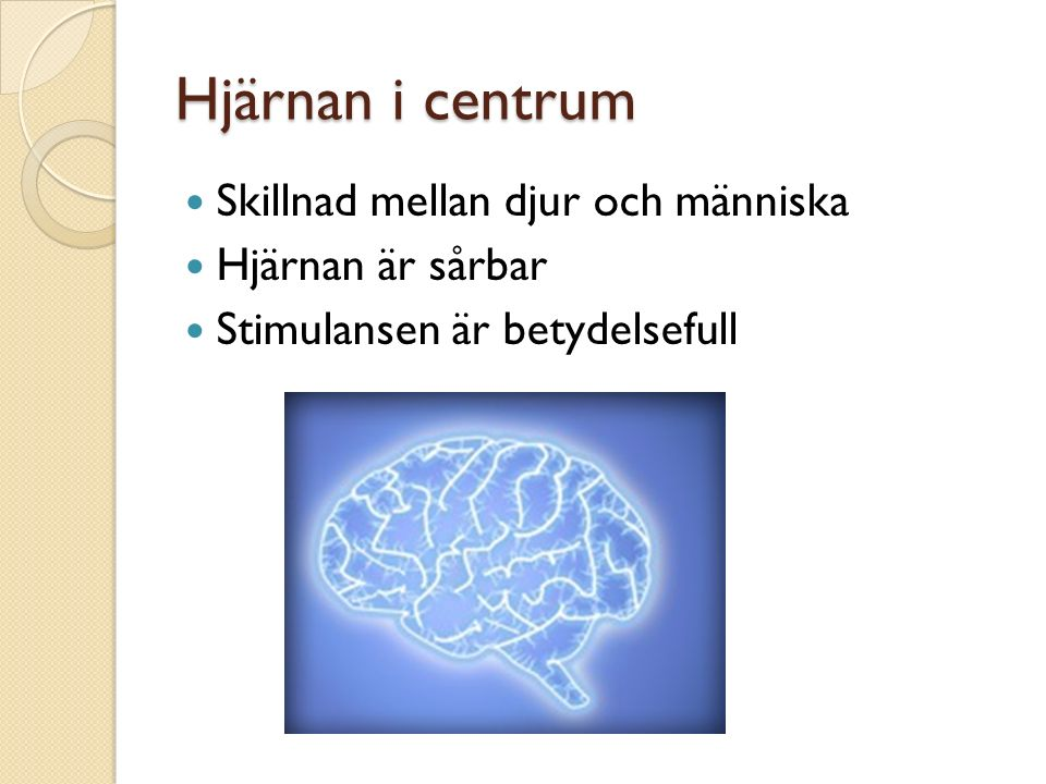Hjärnan i centrum Skillnad mellan djur och människa Hjärnan är sårbar Stimulansen är betydelsefull