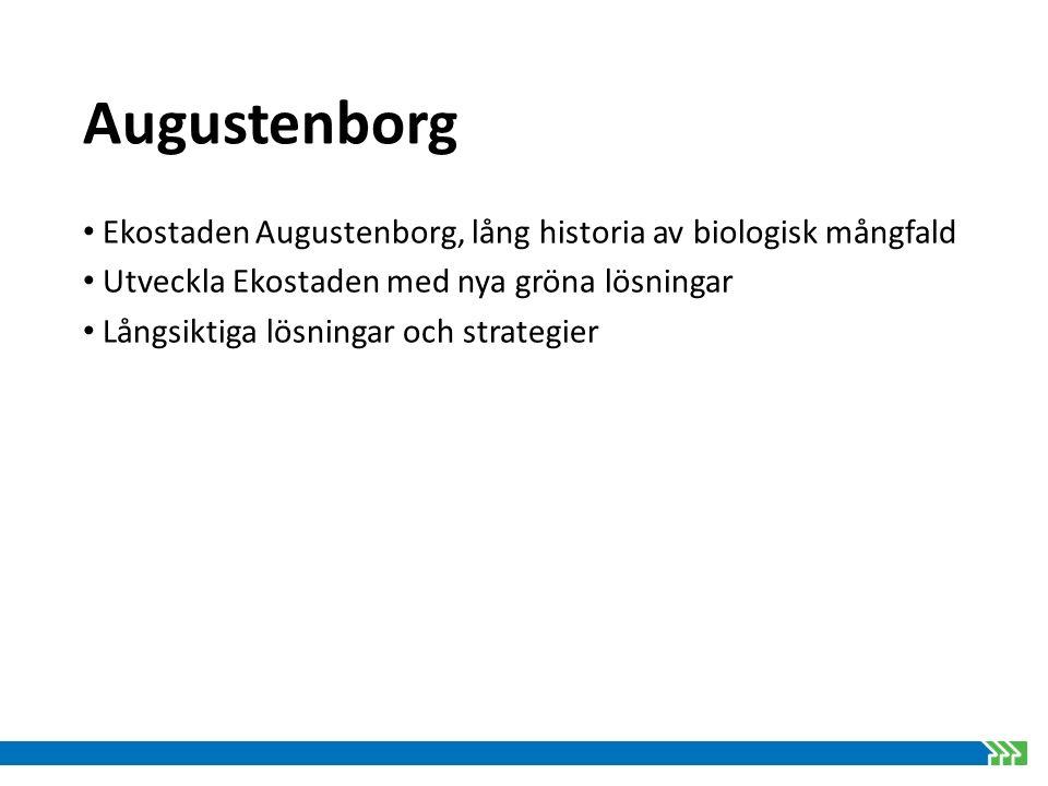 Augustenborg Aktiviteter/åtgärder inom BiodiverCity i Augustenborg Strategi för utveckling av biologisk mångfald Kompletteringsplan för växter Ruderatmark Kostnadseffektiv ängsmark Utveckla 12 gröna tak till mångfaldsbiotop Mångfaldsevent för boende Skyltprogram
