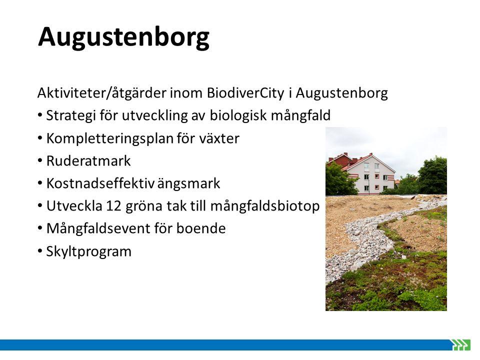 Augustenborg Aktiviteter/åtgärder inom BiodiverCity i Augustenborg Strategi för utveckling av biologisk mångfald Kompletteringsplan för växter Ruderat