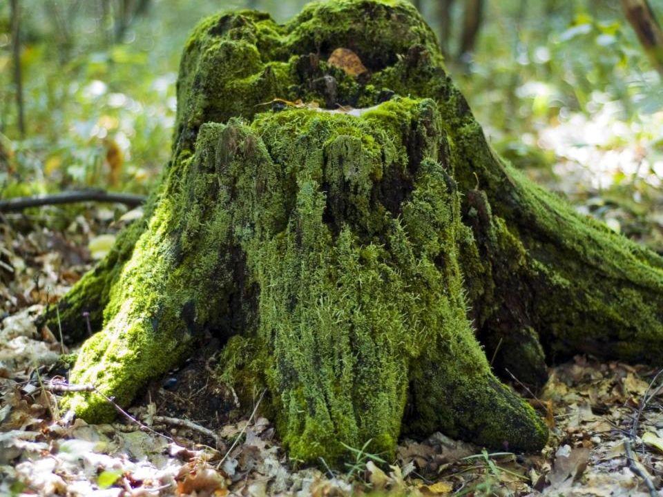 Utmaningen Den boreala skogens dynamik med bränder och andra störningar, den svenska markanvändningen och skogsbrukets utveckling över tiden har skapat förutsättningarna.