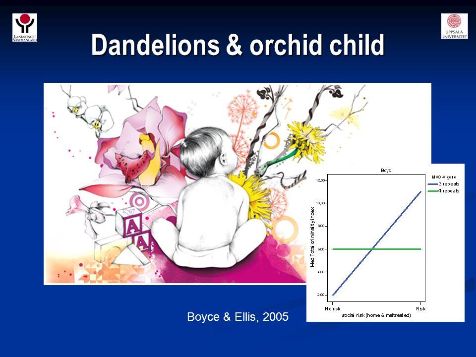 Dandelions & orchid child Boyce & Ellis, 2005