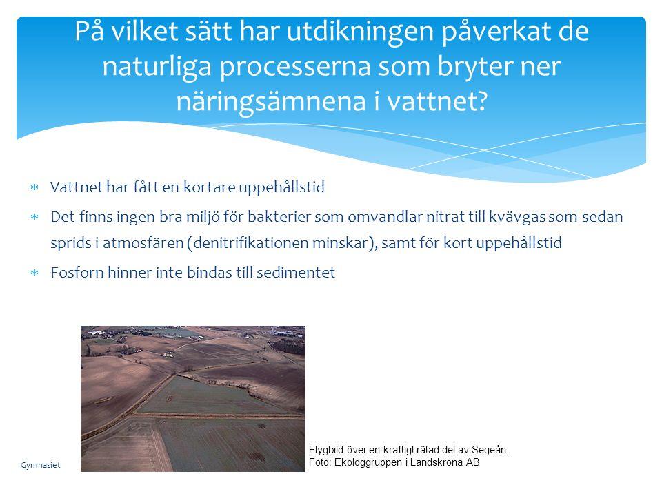  Vattnet har fått en kortare uppehållstid  Det finns ingen bra miljö för bakterier som omvandlar nitrat till kvävgas som sedan sprids i atmosfären (denitrifikationen minskar), samt för kort uppehållstid  Fosforn hinner inte bindas till sedimentet På vilket sätt har utdikningen påverkat de naturliga processerna som bryter ner näringsämnena i vattnet.