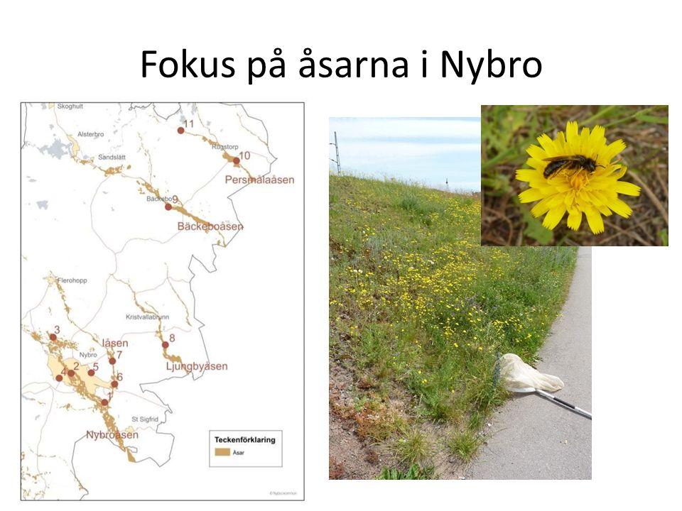 Fokus på åsarna i Nybro