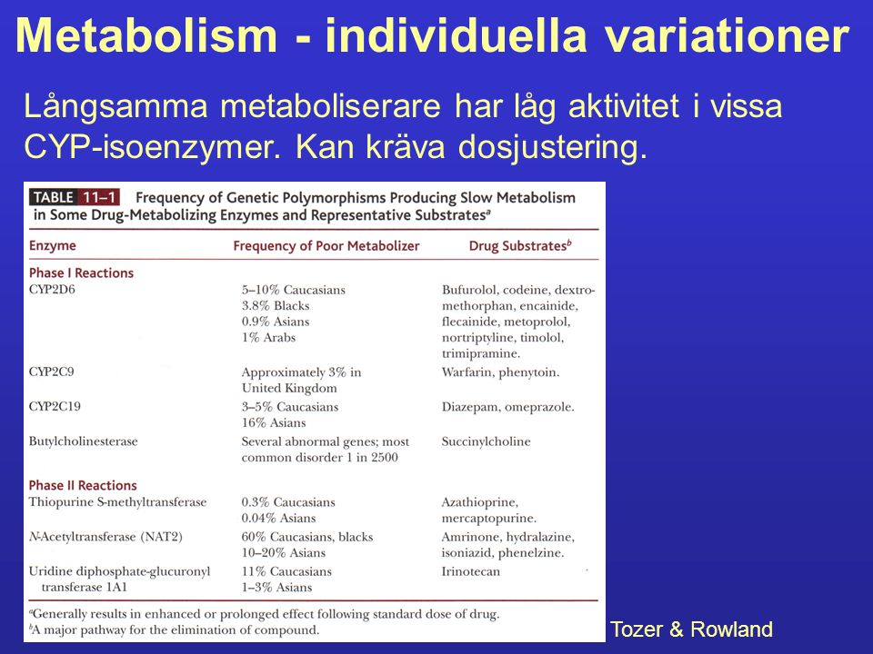 Metabolism - individuella variationer Långsamma metaboliserare har låg aktivitet i vissa CYP-isoenzymer. Kan kräva dosjustering. Tozer & Rowland