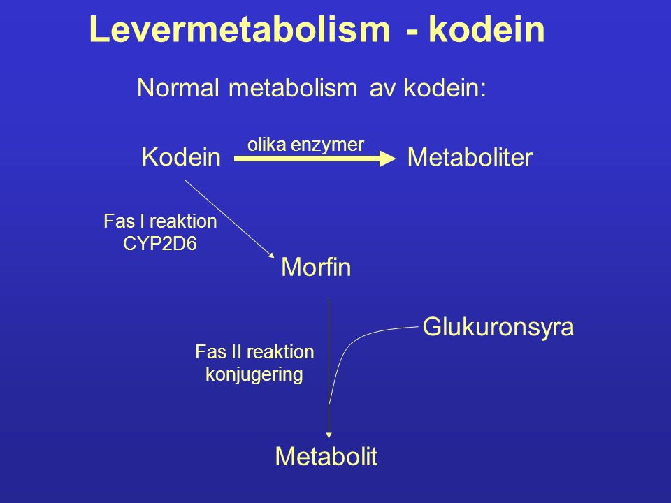 Levermetabolism - kodein Kodein Metaboliter olika enzymer Morfin Fas I reaktion CYP2D6 Metabolit Fas II reaktion konjugering Glukuronsyra Normal metab