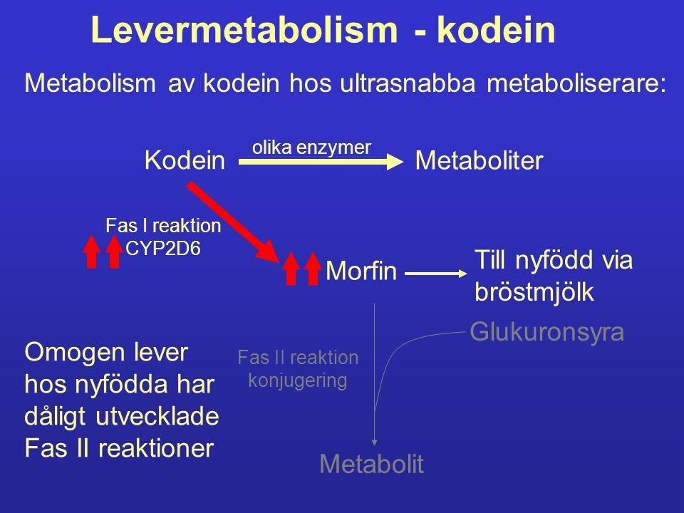 Levermetabolism - kodein Kodein Metaboliter olika enzymer Fas I reaktion CYP2D6 Morfin Metabolit Fas II reaktion konjugering Glukuronsyra Metabolism a