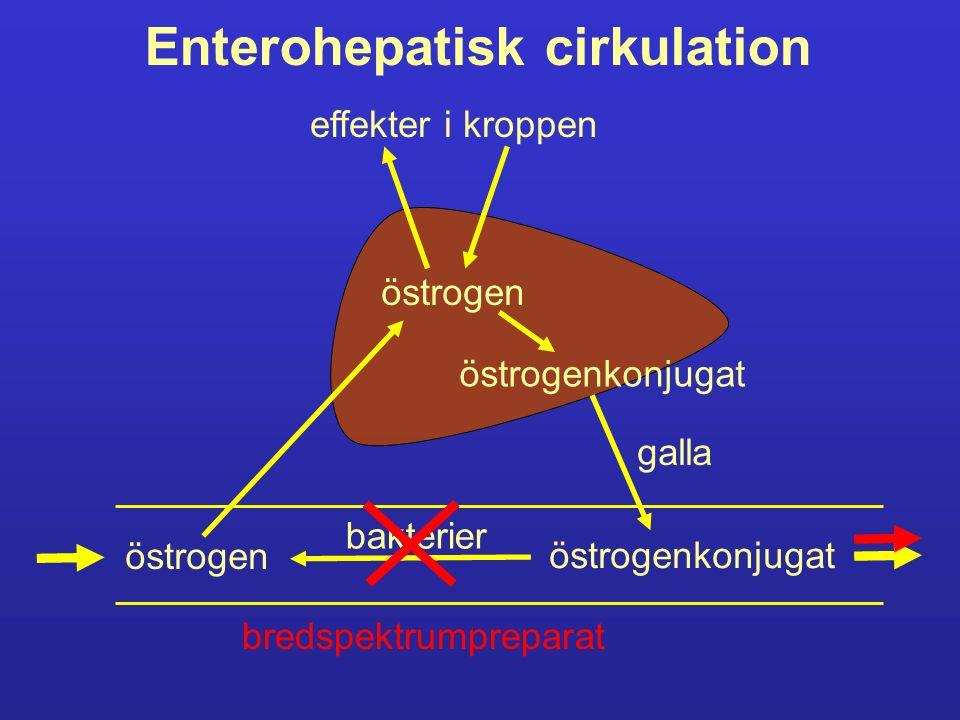 Enterohepatisk cirkulation östrogen östrogenkonjugat bakterier östrogen östrogenkonjugat galla effekter i kroppen bredspektrumpreparat