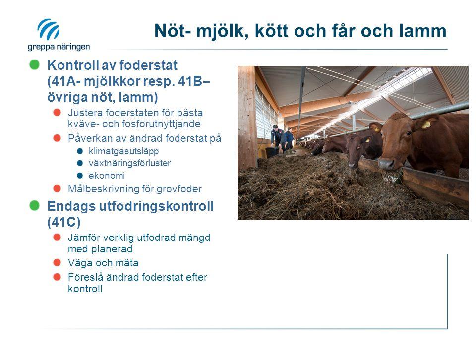 Nöt- mjölk, kött och får och lamm Kontroll av foderstat (41A- mjölkkor resp.