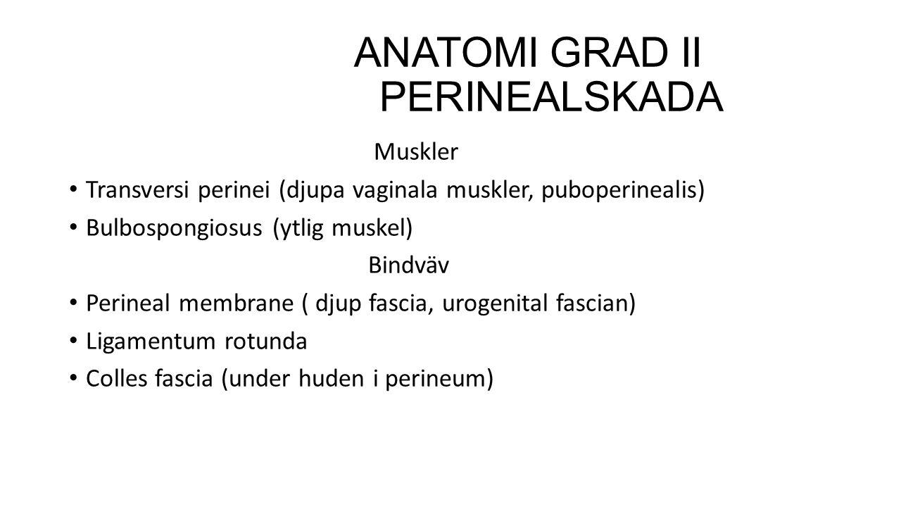 ANATOMI GRAD II PERINEALSKADA Muskler Transversi perinei (djupa vaginala muskler, puboperinealis) Bulbospongiosus (ytlig muskel) Bindväv Perineal memb