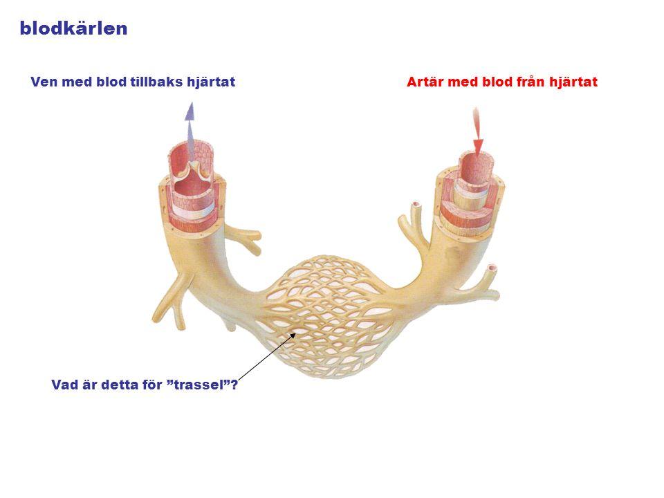 blodkärlen Artär med blod från hjärtatVen med blod tillbaks hjärtat Vad är detta för trassel ?
