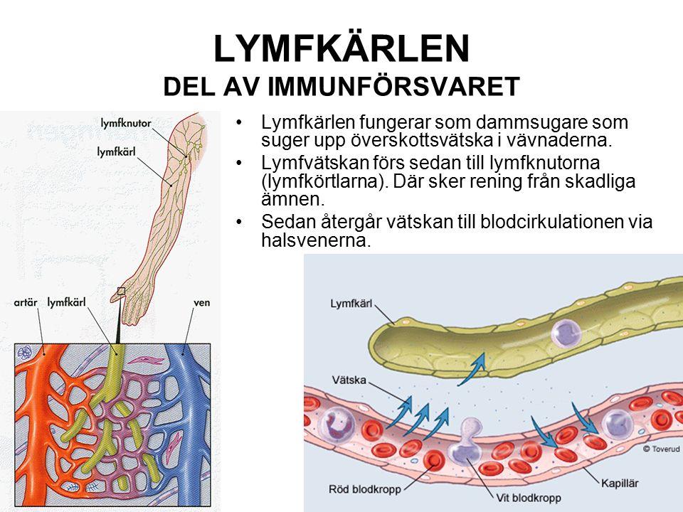 LYMFKÄRLEN DEL AV IMMUNFÖRSVARET Lymfkärlen fungerar som dammsugare som suger upp överskottsvätska i vävnaderna. Lymfvätskan förs sedan till lymfknuto