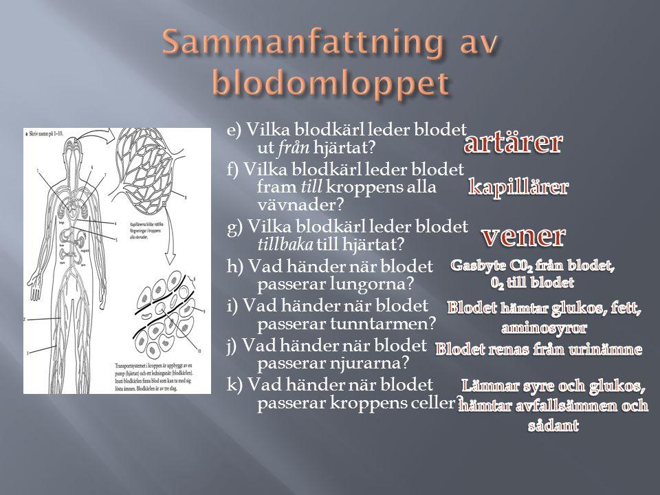 e) Vilka blodkärl leder blodet ut från hjärtat.