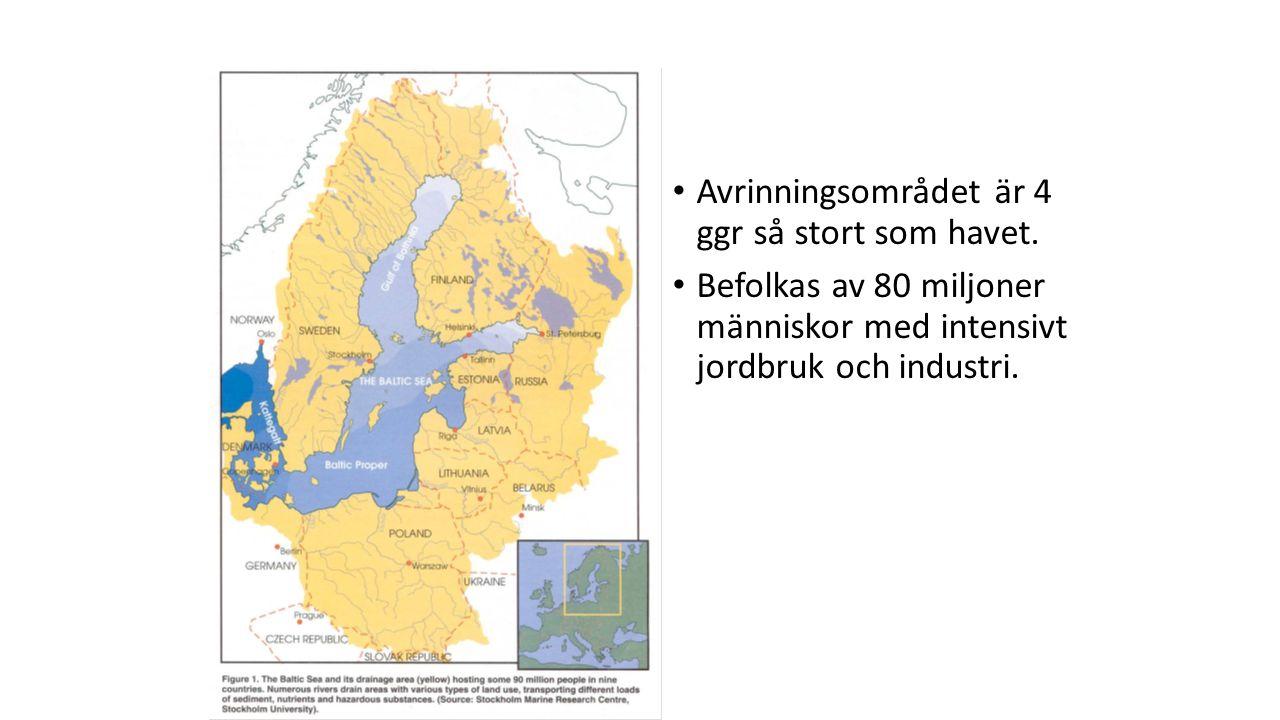 Syre Det ständiga inflödet av sött och syrerikt vatten gör att ytvattnet i Östersjön är rikt på syre.