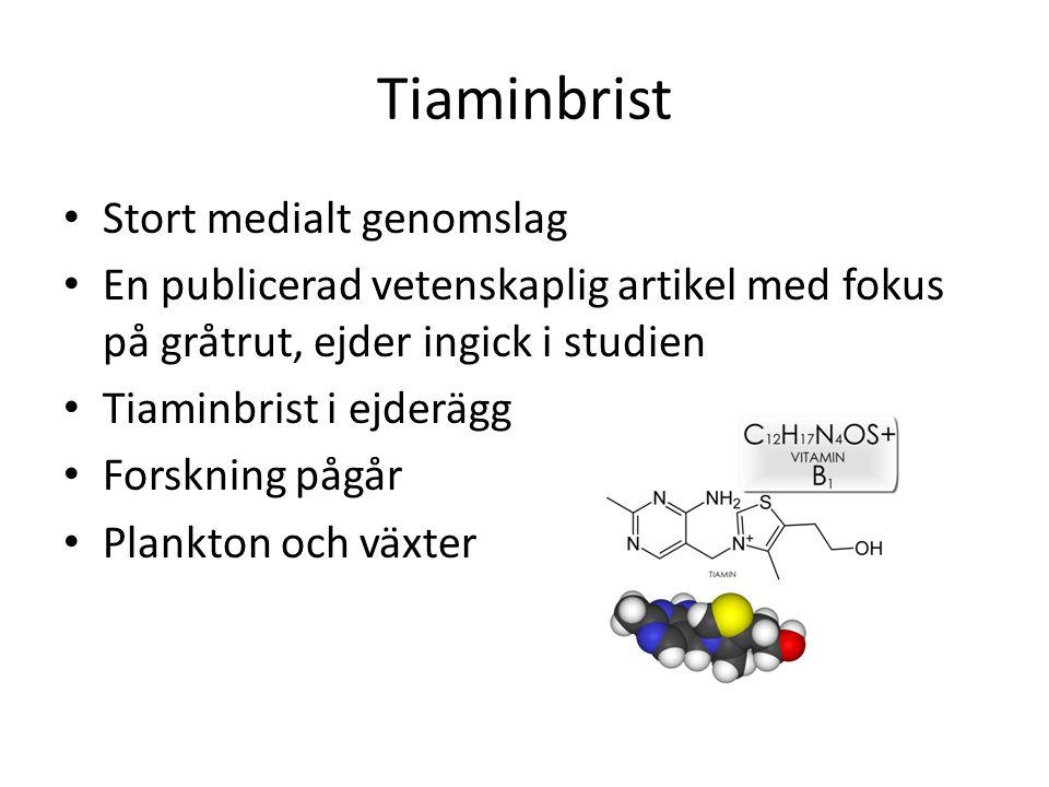 Tiaminbrist Stort medialt genomslag En publicerad vetenskaplig artikel med fokus på gråtrut, ejder ingick i studien Tiaminbrist i ejderägg Forskning pågår Plankton och växter
