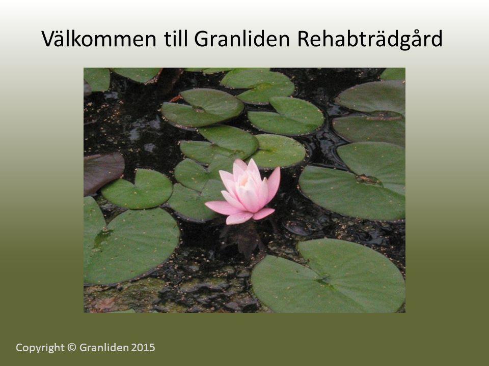 Välkommen till Granliden Rehabträdgård Copyright © Granliden 2015