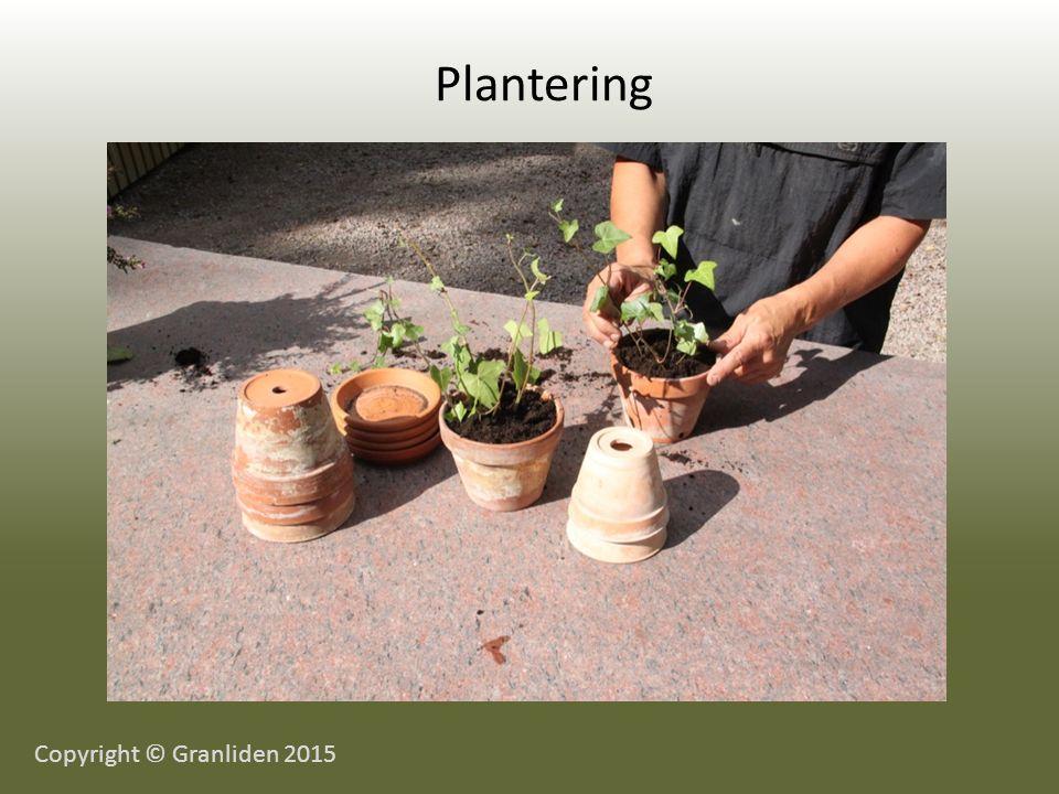 Plantering Copyright © Granliden 2015