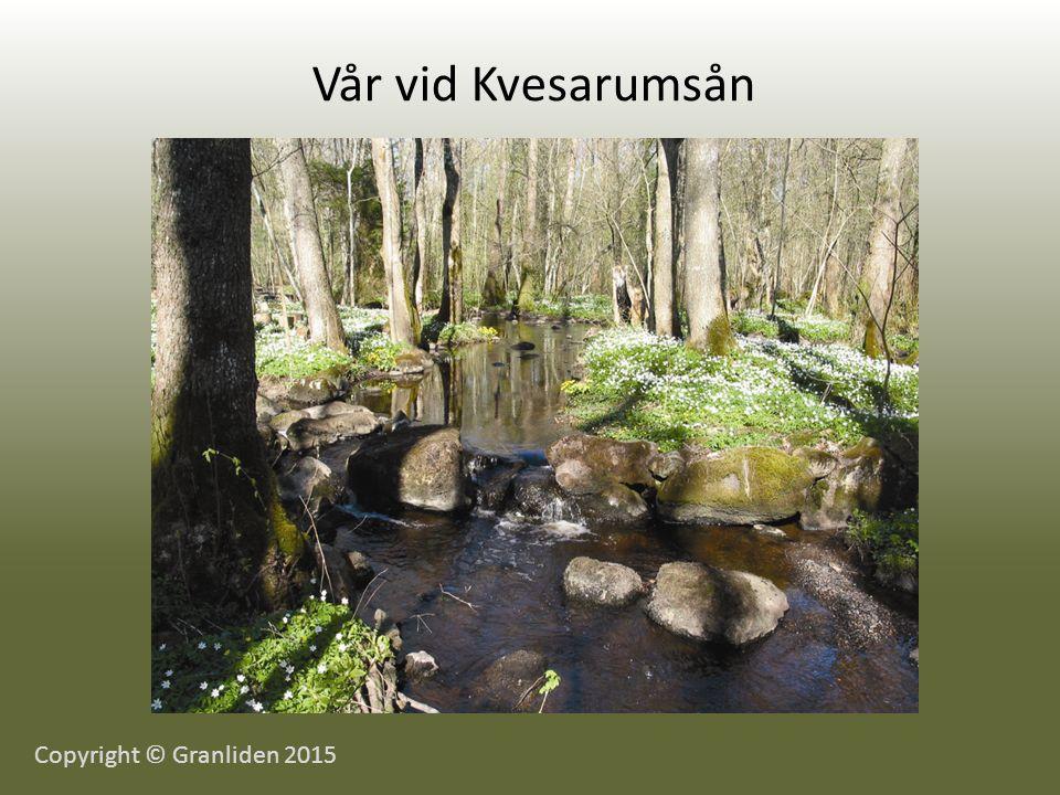 Vår vid Kvesarumsån Copyright © Granliden 2015