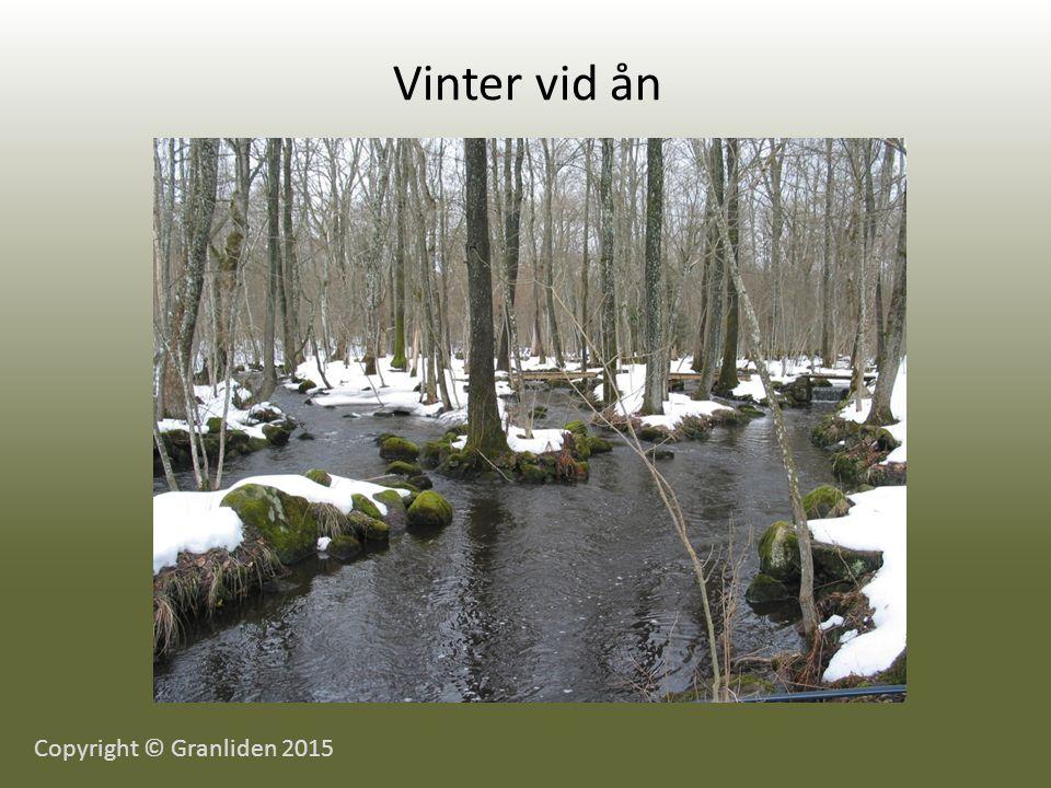 Vinter vid ån Copyright © Granliden 2015