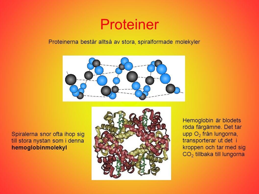 Proteiner Proteinerna består alltså av stora, spiralformade molekyler Spiralerna snor ofta ihop sig till stora nystan som i denna hemoglobinmolekyl He