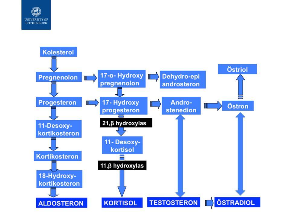  Kortikosteroider hämmar fosfolipaskaskaden:  Syntes och frisättning av lipocortin-1 (fosfolipase A 2 - inhibitoriskt glykoprotein; kallas även annexin)  Inducerar IkB produktion – binder Nf-kB  Påverkar cytokinproduktion (ex funktion av T-lymocyter och makrofager)  Minskar histaminfrisättning Hämning av inflammationsvägar