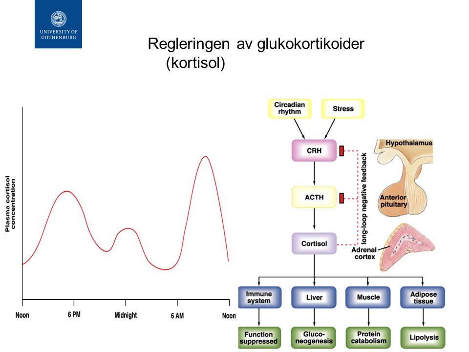 Biverkningar Minskat infektionssvar Hämning av endogen GC syntes Metabola effekter Iatrogent Cushings syndrom Tillväxthämning hos barn Osteoporos Eufori Katarakt Oral svampinfektion Magsår.