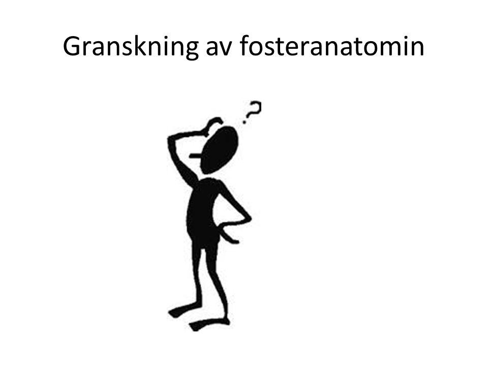 Granskning av fosteranatomin