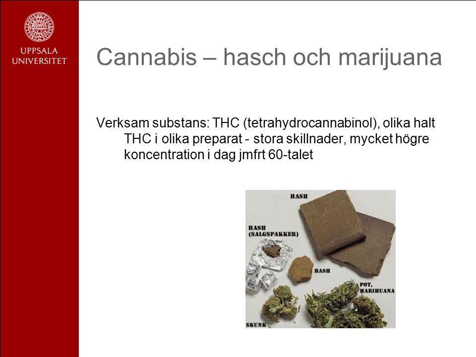 Cannabis – hasch och marijuana Verksam substans: THC (tetrahydrocannabinol), olika halt THC i olika preparat - stora skillnader, mycket högre koncentration i dag jmfrt 60-talet