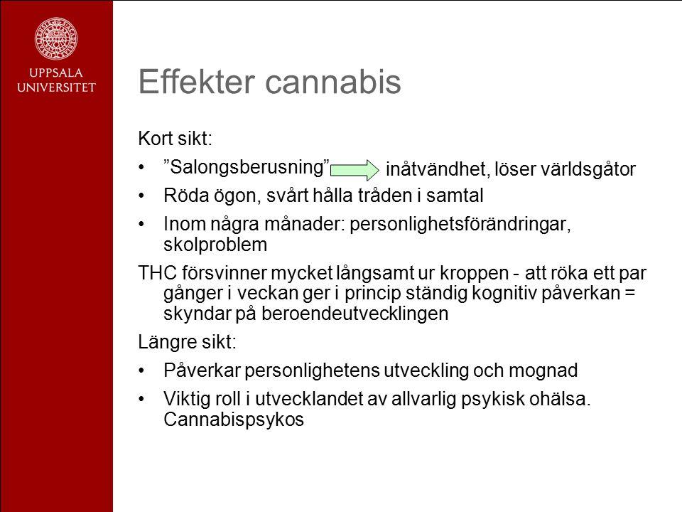 Effekter cannabis Kort sikt: Salongsberusning Röda ögon, svårt hålla tråden i samtal Inom några månader: personlighetsförändringar, skolproblem THC försvinner mycket långsamt ur kroppen - att röka ett par gånger i veckan ger i princip ständig kognitiv påverkan = skyndar på beroendeutvecklingen Längre sikt: Påverkar personlighetens utveckling och mognad Viktig roll i utvecklandet av allvarlig psykisk ohälsa.
