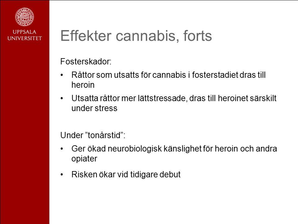 Effekter cannabis, forts Fosterskador: Råttor som utsatts för cannabis i fosterstadiet dras till heroin Utsatta råttor mer lättstressade, dras till heroinet särskilt under stress Under tonårstid : Ger ökad neurobiologisk känslighet för heroin och andra opiater Risken ökar vid tidigare debut