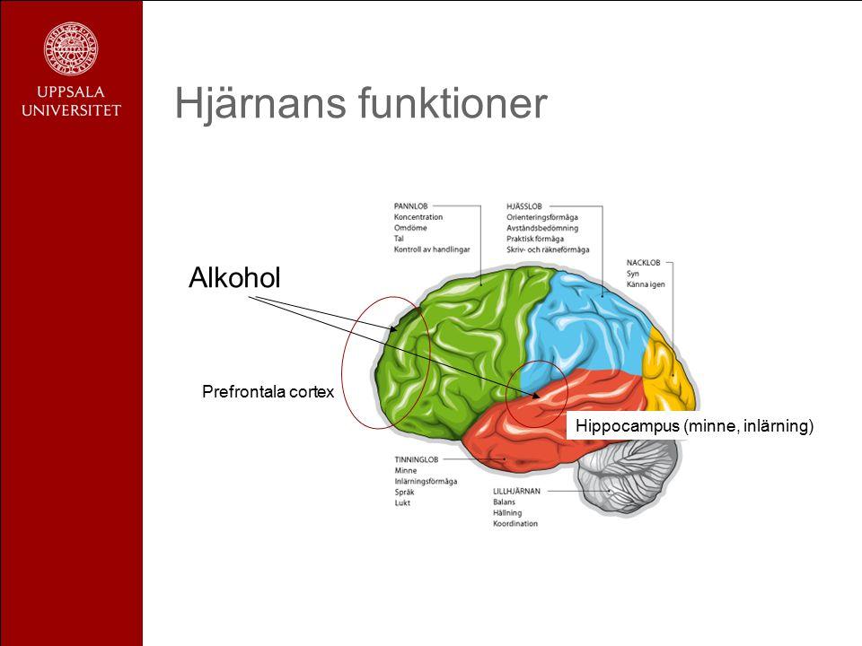 Hjärnans funktioner Alkohol Prefrontala cortex Hippocampus (minne, inlärning)