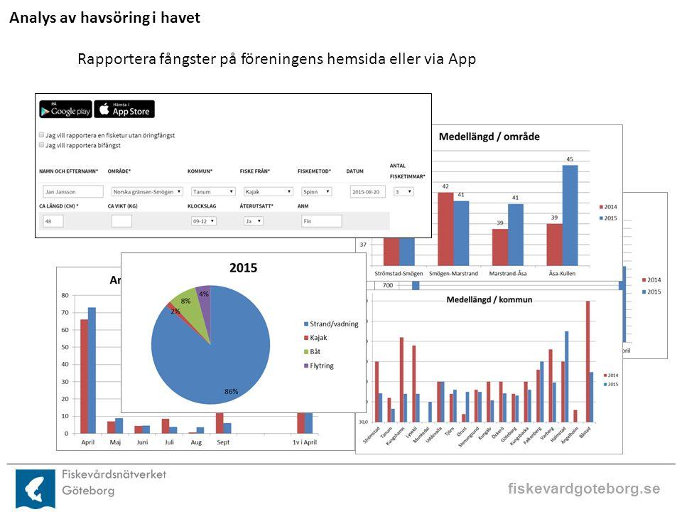 fiskevardgoteborg.se Analys av havsöring i havet Rapportera fångster på föreningens hemsida eller via App