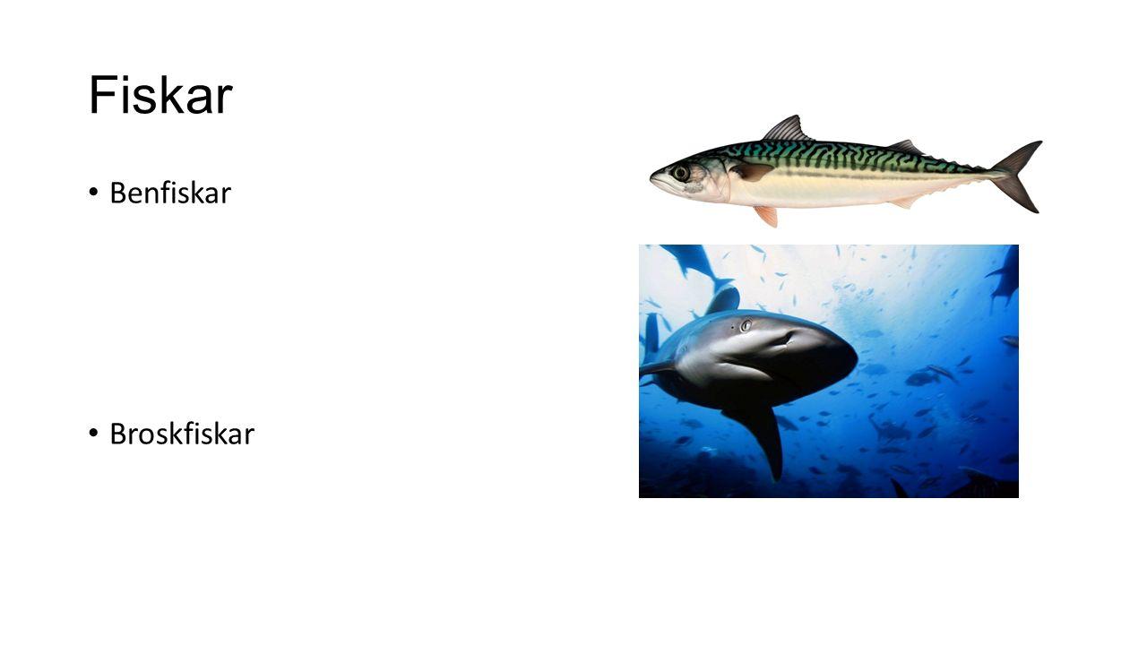 Fiskar Benfiskar Broskfiskar