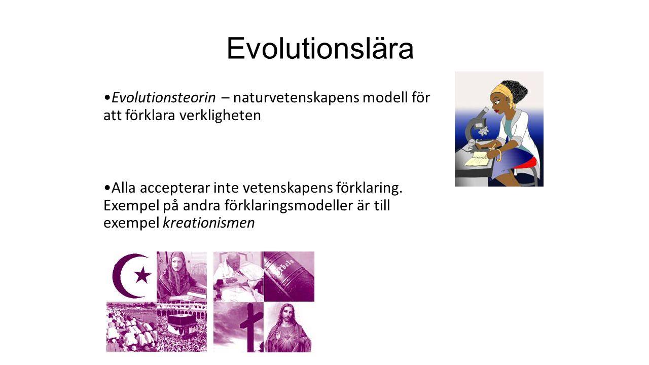 Evolutionslära Evolutionsteorin – naturvetenskapens modell för att förklara verkligheten Alla accepterar inte vetenskapens förklaring.