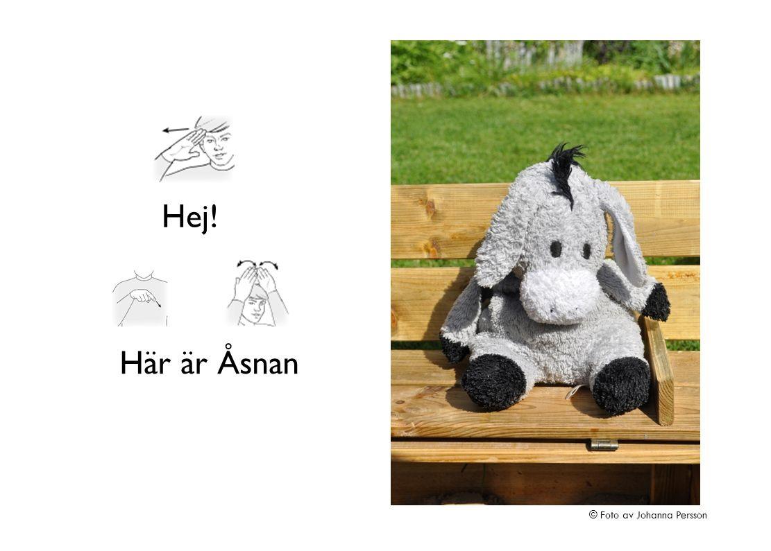 Åsna gungar högt © Foto av Johanna Persson