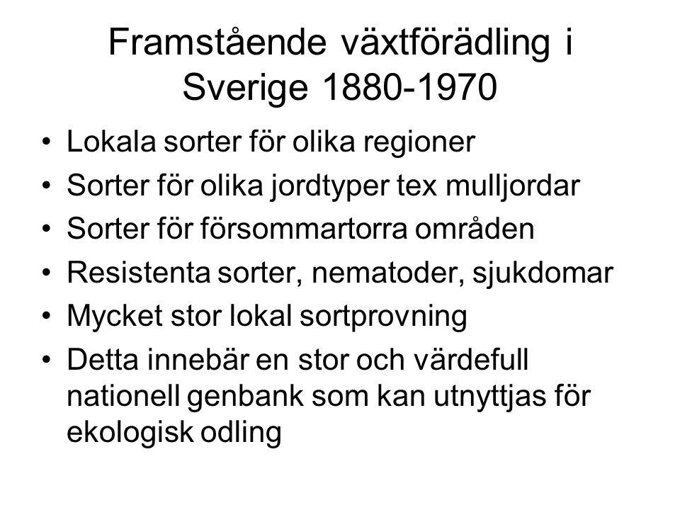 Framstående växtförädling i Sverige 1880-1970 Lokala sorter för olika regioner Sorter för olika jordtyper tex mulljordar Sorter för försommartorra områden Resistenta sorter, nematoder, sjukdomar Mycket stor lokal sortprovning Detta innebär en stor och värdefull nationell genbank som kan utnyttjas för ekologisk odling