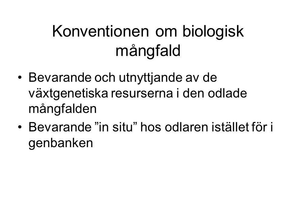 Konventionen om biologisk mångfald Bevarande och utnyttjande av de växtgenetiska resurserna i den odlade mångfalden Bevarande in situ hos odlaren istället för i genbanken