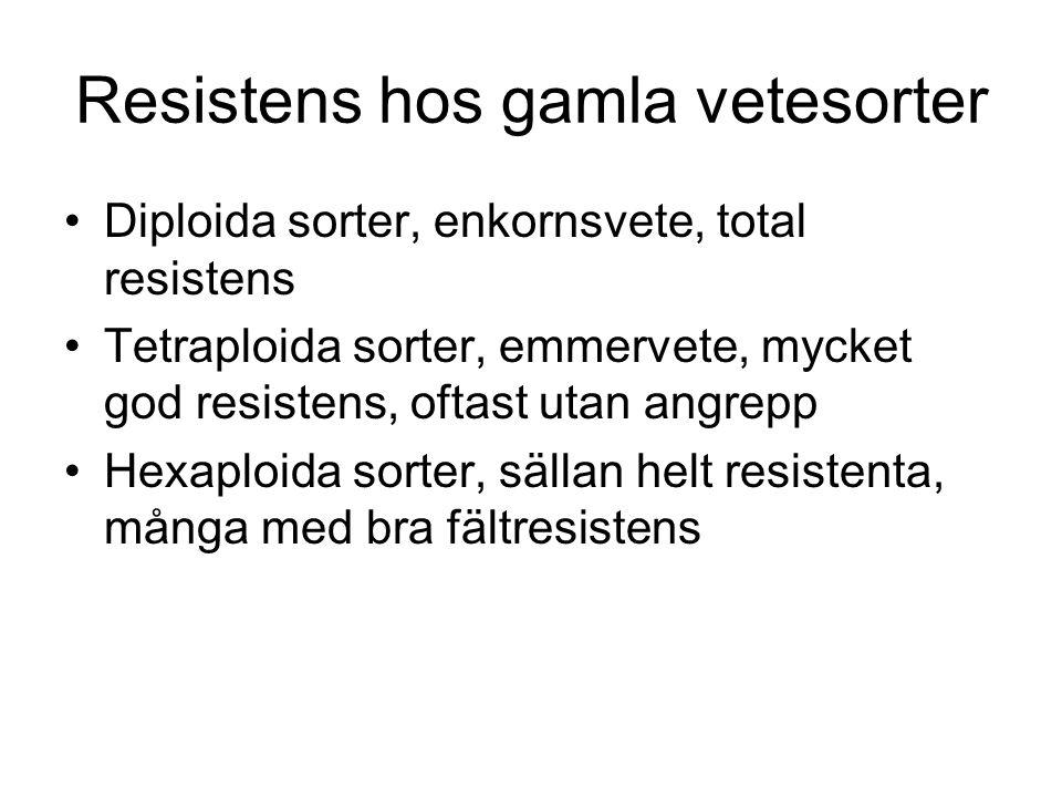 Resistens hos gamla vetesorter Diploida sorter, enkornsvete, total resistens Tetraploida sorter, emmervete, mycket god resistens, oftast utan angrepp Hexaploida sorter, sällan helt resistenta, många med bra fältresistens