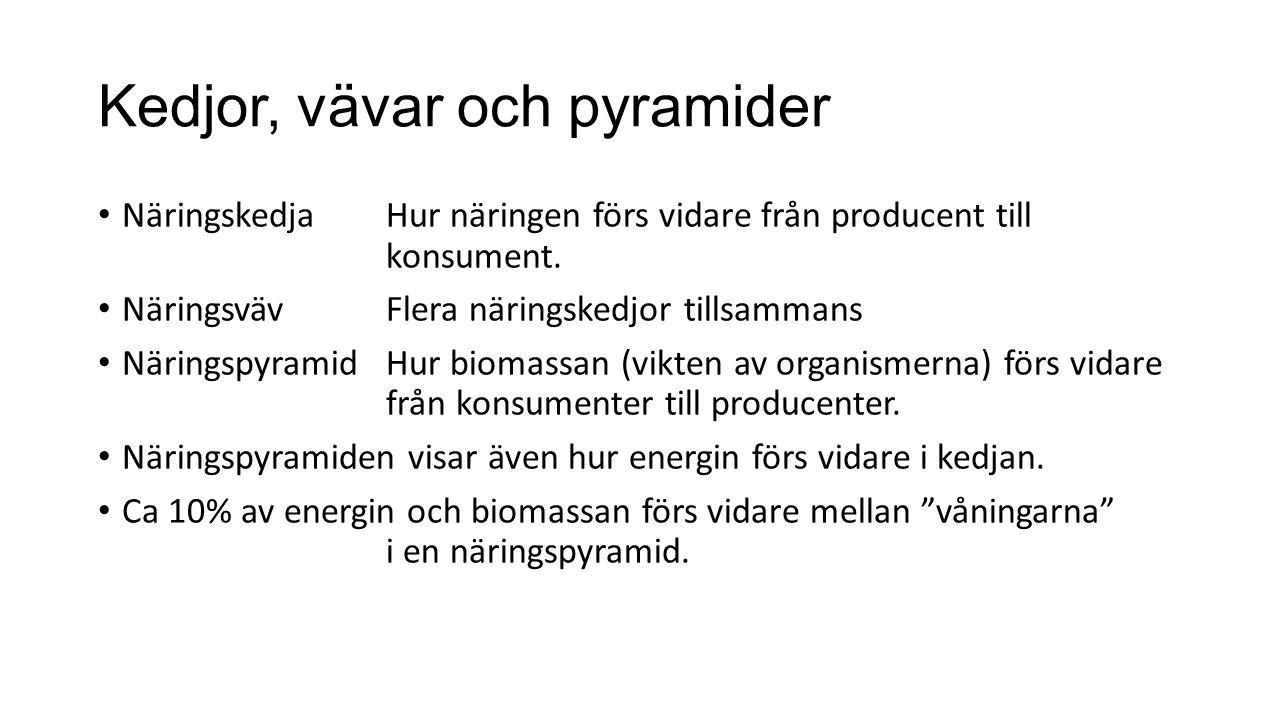 Kedjor, vävar och pyramider NäringskedjaHur näringen förs vidare från producent till konsument. NäringsvävFlera näringskedjor tillsammans Näringspyram