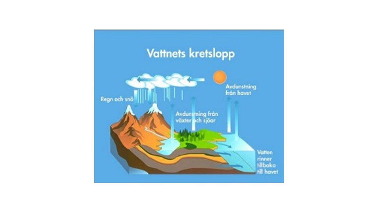 Råvarorna i ekosystemet rör sig i kretslopp Kolatomer behövs för att bygga upp organismernas olika delar Stärkelse, cellulosa, fett och proteiner består till stor del av kolatomer.