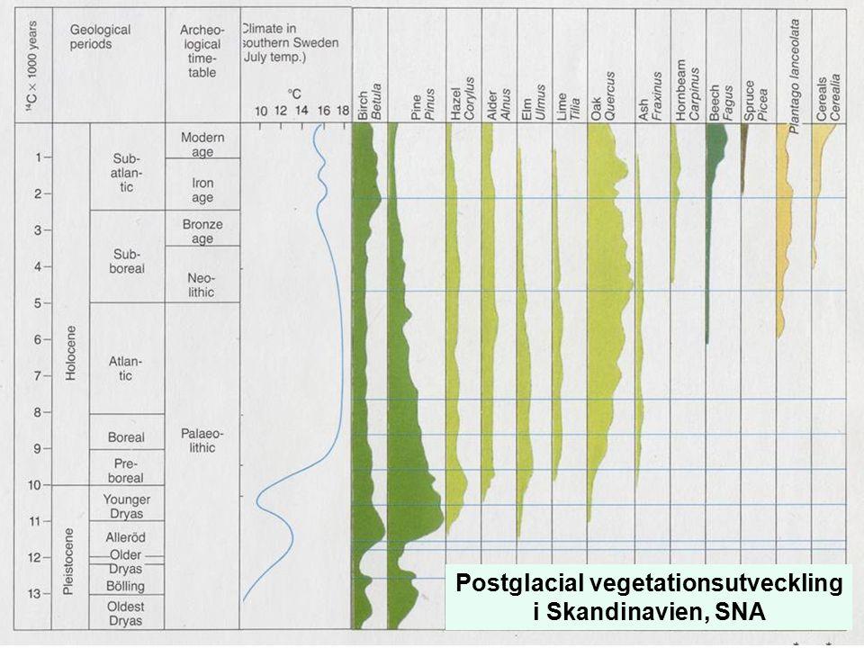 Postglacial vegetationsutveckling i Skandinavien, SNA