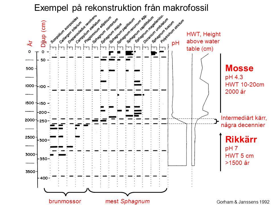 Rikkärr pH 7 HWT 5 cm >1500 år brunmossor Mosse pH 4.3 HWT 10-20cm 2000 år mest Sphagnum Gorham & Janssens 1992 År Djjup (cm) HWT, Height above water table (cm) pH Intermediärt kärr, några decennier Exempel på rekonstruktion från makrofossil